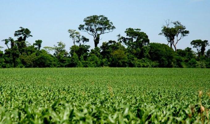 Meio Ambiente e Agricultura